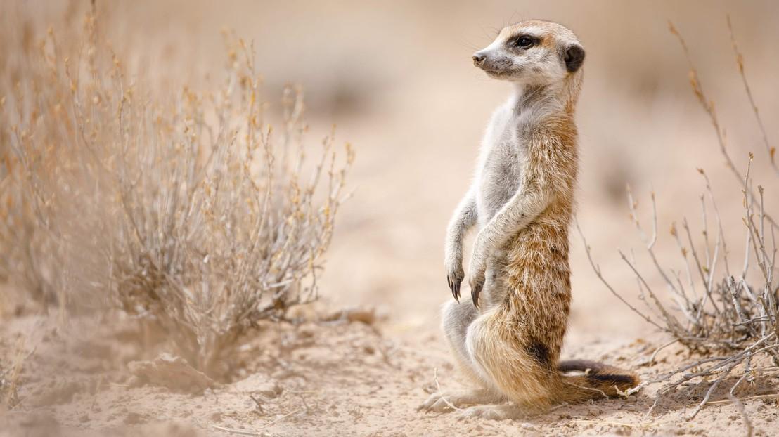 Comprendre Le Comportement Des Animaux Sauvages Pour Les Proteger Epfl